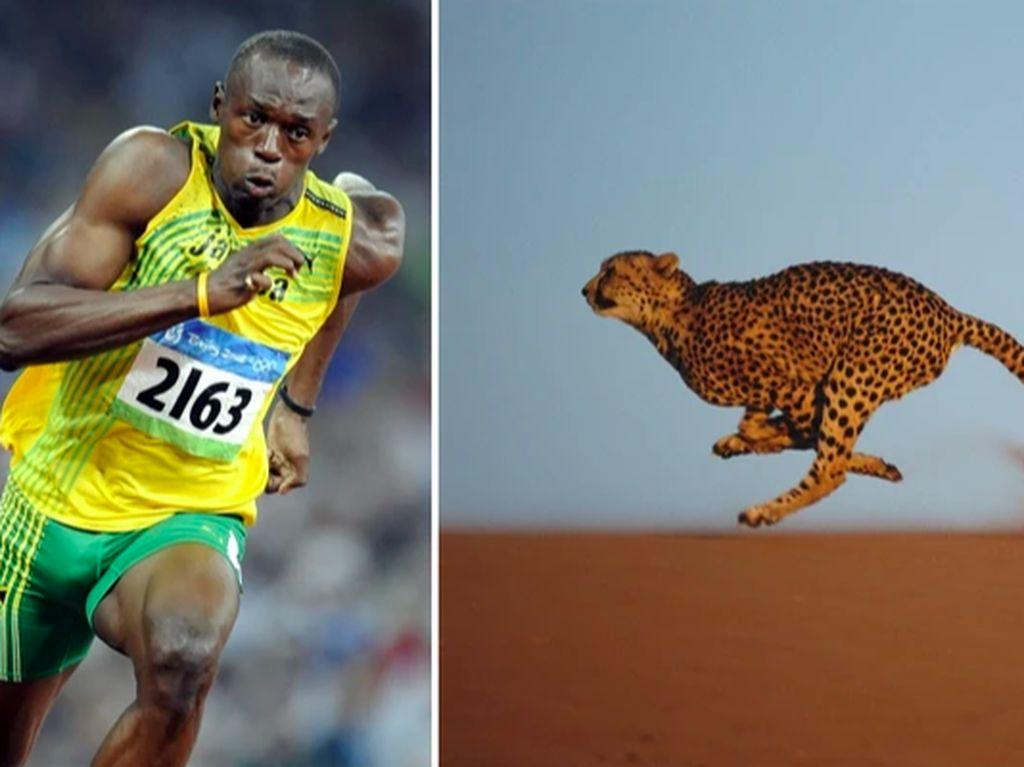 9 Hewan Olimpiade yang Pecahkan Rekor Manusia