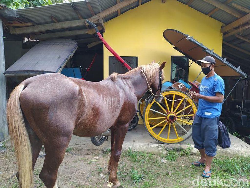Potret Miris Kusir Andong Candi Borobudur yang Kesulitan Akibat Pandemi