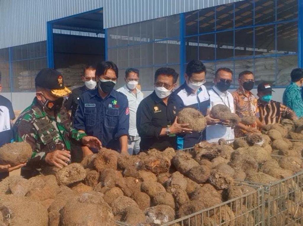 Mentan Ungkap Jokowi Ingin Ada Pabrik Beras Porang