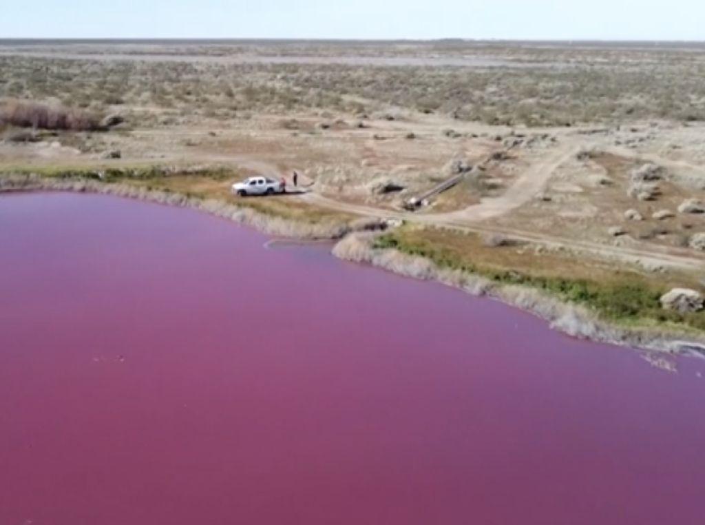 Pemandangan Tak Biasa, Air Laguna di Argentina Berubah Jadi Pink