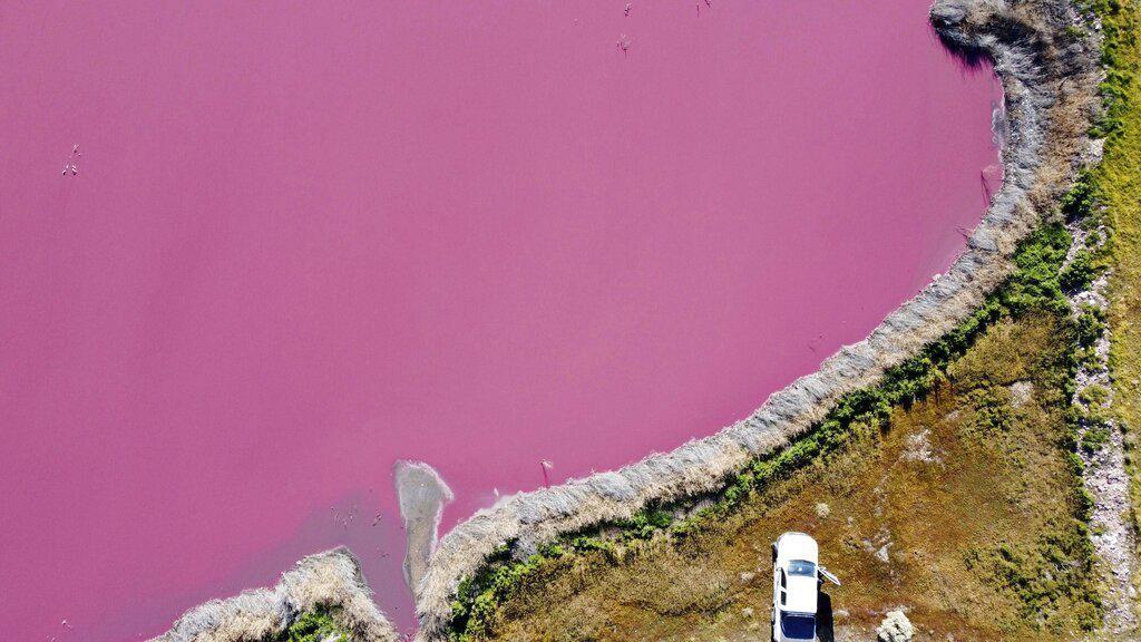 Saat Danau di Argentina Berwarna Pink Gegara Limbah