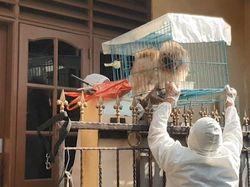 Cerita Relawan Penyelamat Hewan Peliharaan Milik Pasien Corona