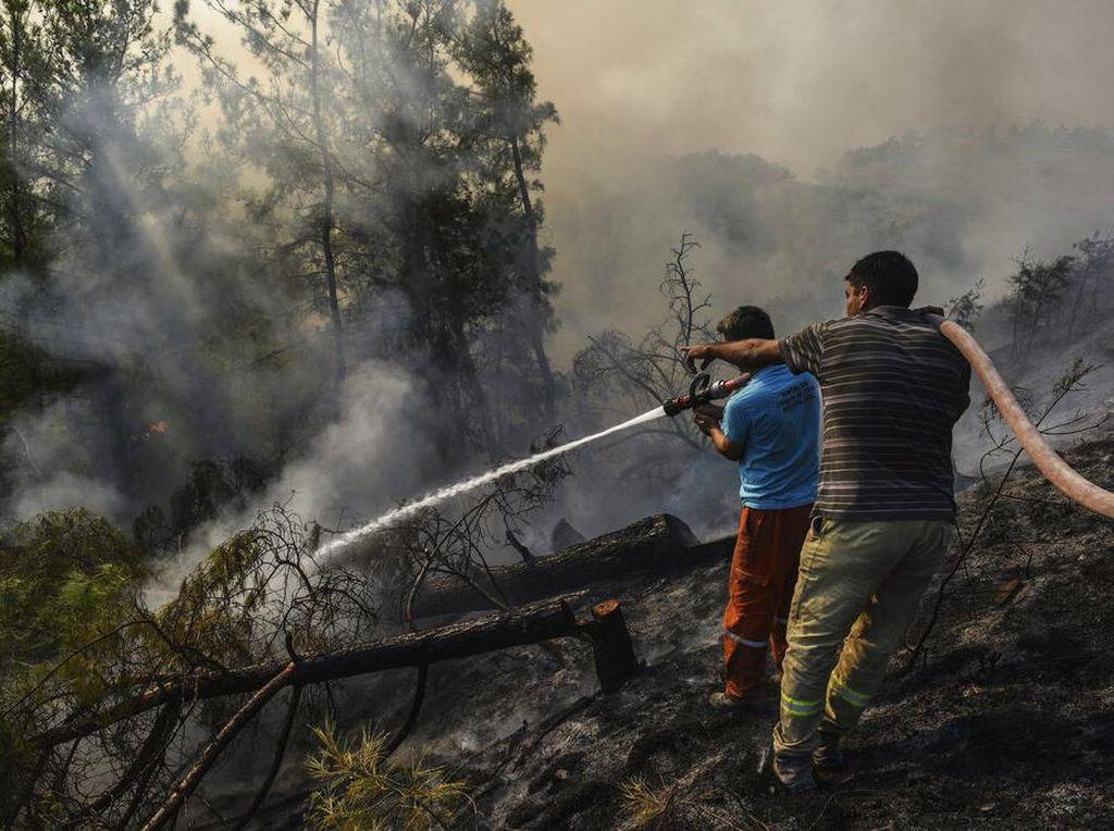 Potret Warga Berjibaku Padamkan Kebakaran Hutan di Turki