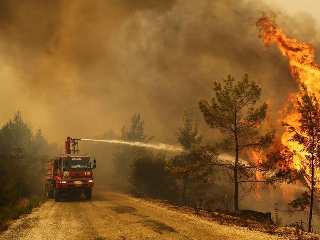 Korban Tewas Akibat Kebakaran Hutan di Turki Bertambah Jadi 8 Orang