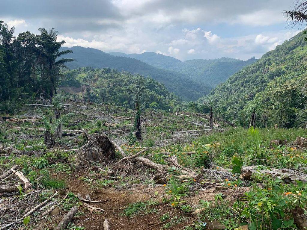 Kader Jadi Tersangka Pembalakan Hutan Lindung, Ini Kata Gerindra Sulsel