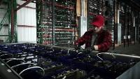 Kerja di Tambang Bitcoin, Remaja Ini Digaji Ratusan Juta