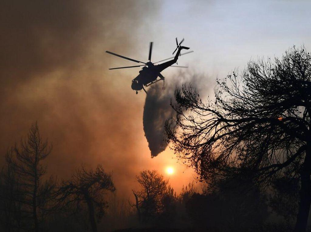 Video Ganasnya Kebakaran Hutan di Tunisia