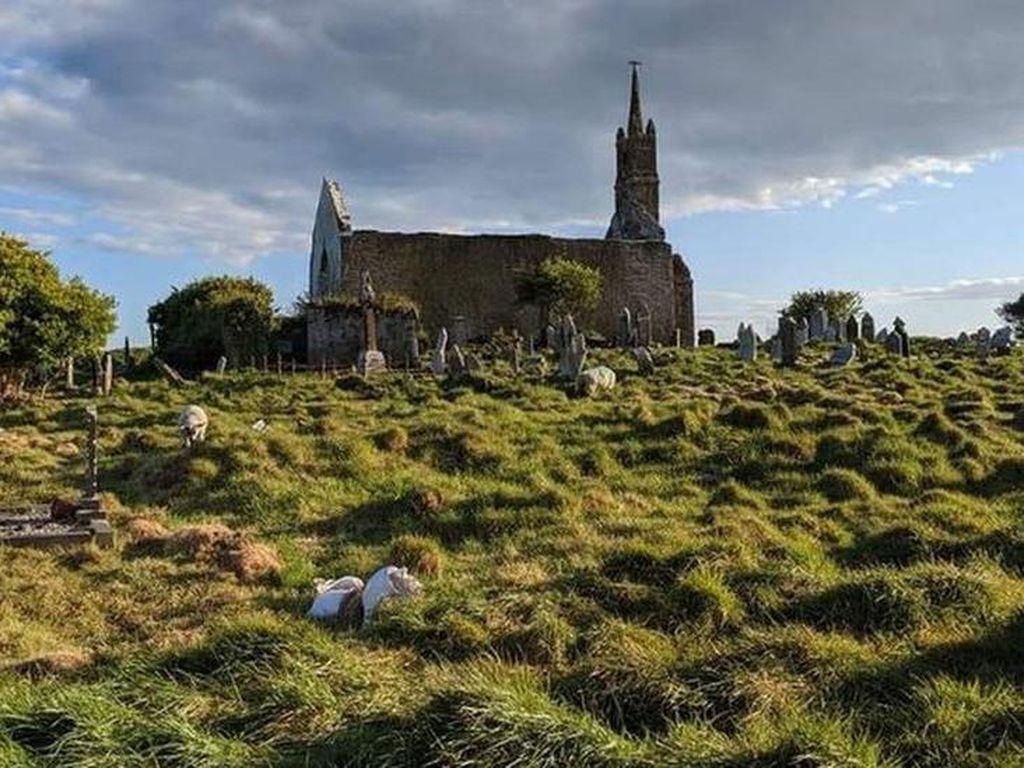 Terima Kasih Kambing-Domba! Akhirnya Kuburan Kuno Ini Ketemu Juga