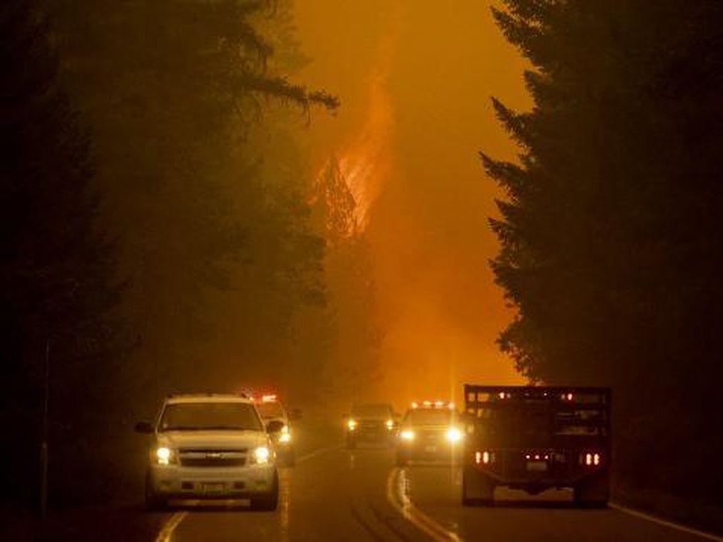 Saksi Mata Ganasnya Kebakaran Hutan di California