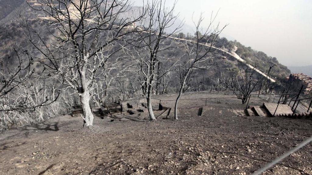Kebakaran Hutan di Aljazair, 38 Orang Tewas
