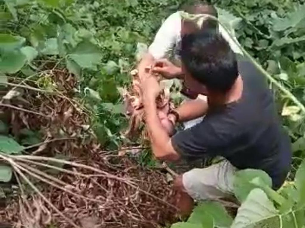 Sedih, Bayi Perempuan Dibuang di Tumpukan Sampah di Asahan Sumut