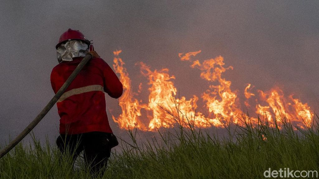 Melihat Perjuangan Damkar Jinakkan Kebakaran Lahan di Ogan Ilir