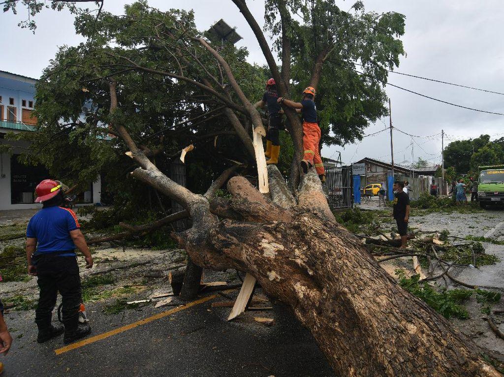 Pohon-pohon di Palu Tumbang Imbas Cuaca Buruk