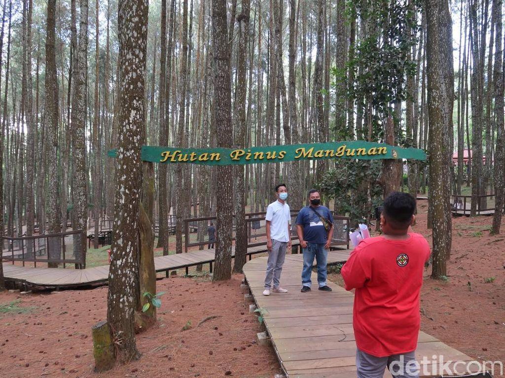 Ini Hutan Pinus Mangunan, Wisata Bantul yang Boleh Buka Saat PPKM Level 3