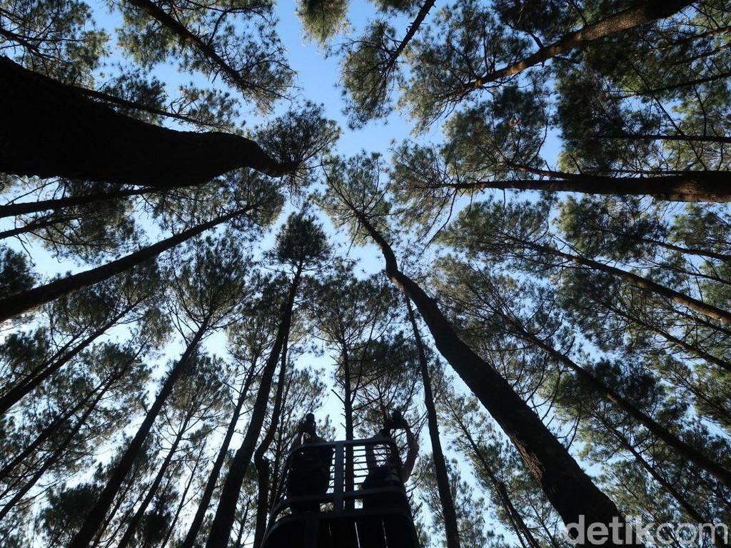 Kapan Ya Bisa ke Hutan Pinus Mangunan Lagi?