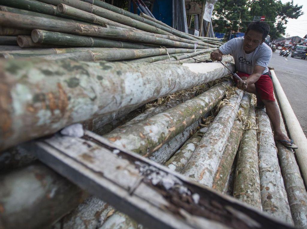 Anjlok! Penjualan Pohon Pinang Turun 90 Persen