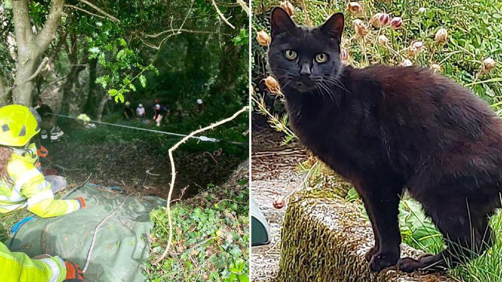 Foto: Kucing Bantu Selamatkan Pemiliknya yang Jatuh ke Jurang