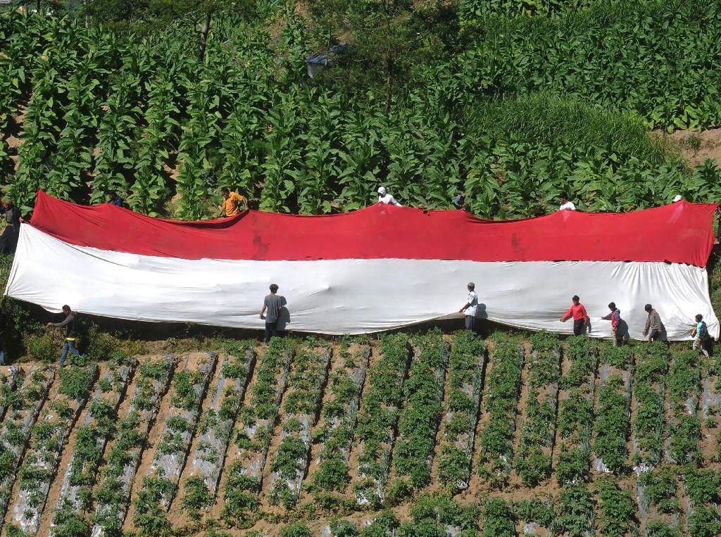 Bendera Merah Putih Raksasa Membentang di Kaki Gunung Merbabu