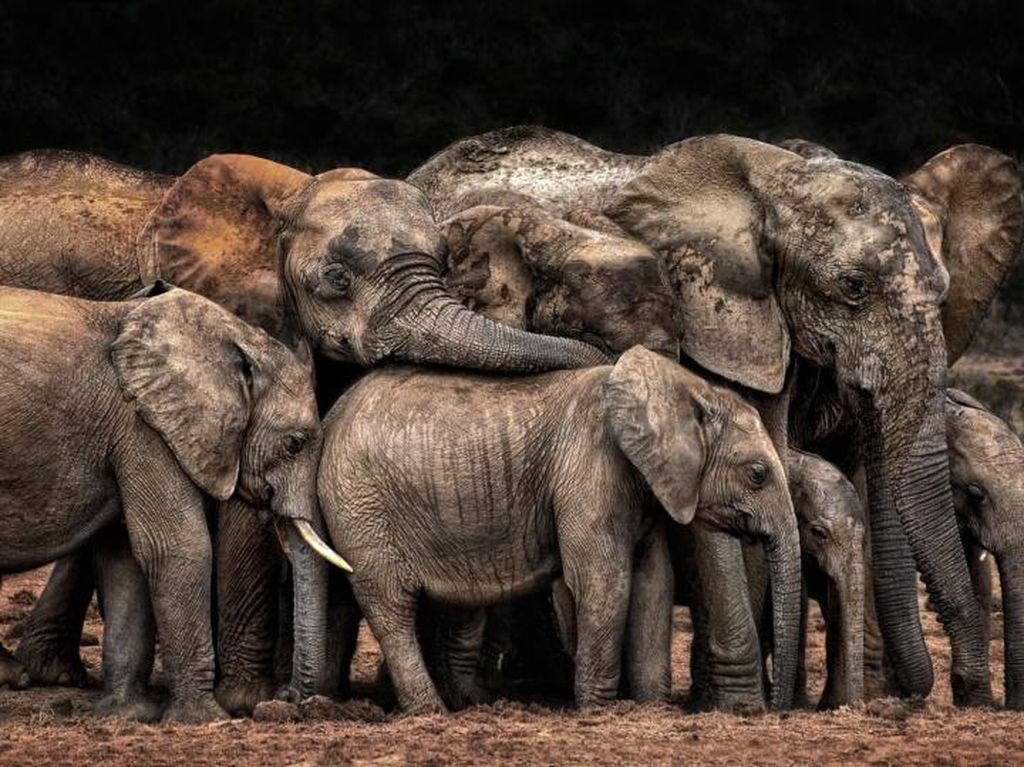 Karya Jawara Konten Foto CEWE Bikin Mata Terkesima