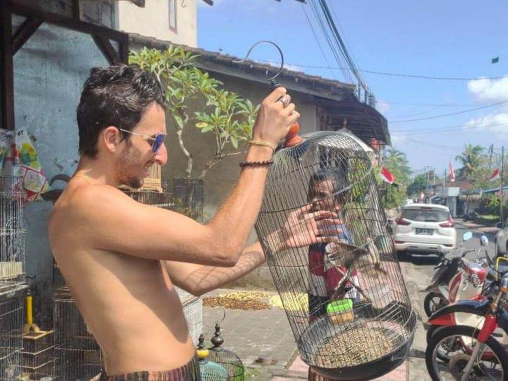 Viral Bule di Bali Kerap Beli Burung Lalu Dilepasliarkan, BKSDA Apresiasi