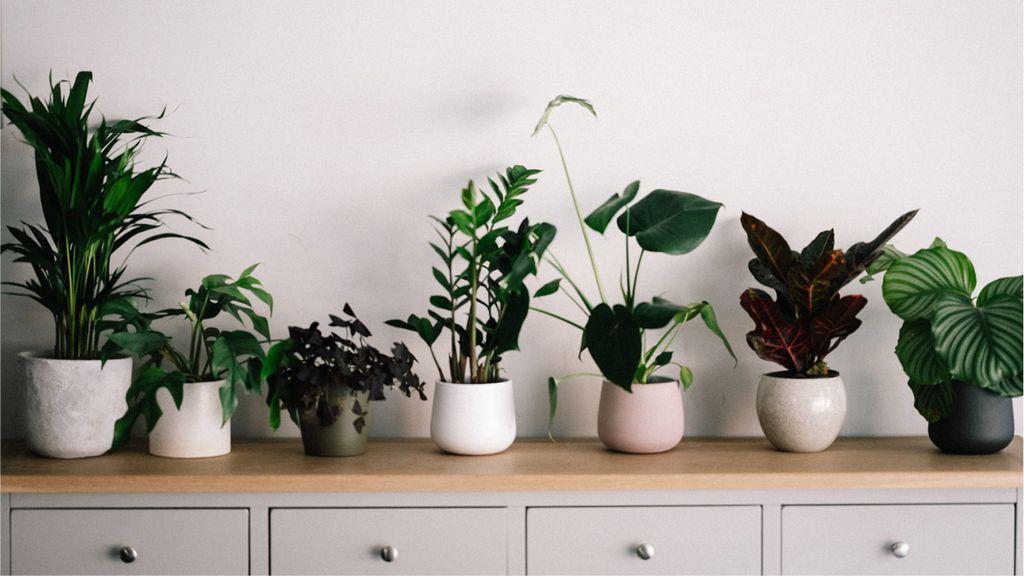 Cara merawat tanaman hias agar lebih subur dan terlihat segar/unsplash/Annie Spartt