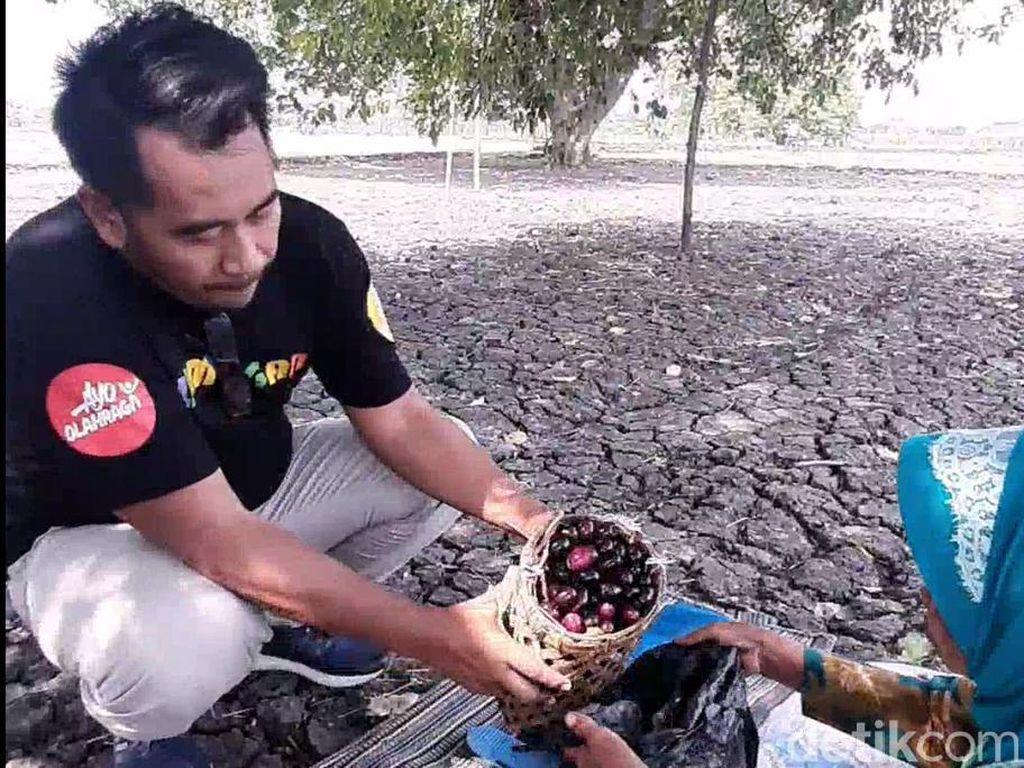 Mengenang Masa Kecil dengan Wisata Petik Buah Juwet di Desa Lamongan Ini