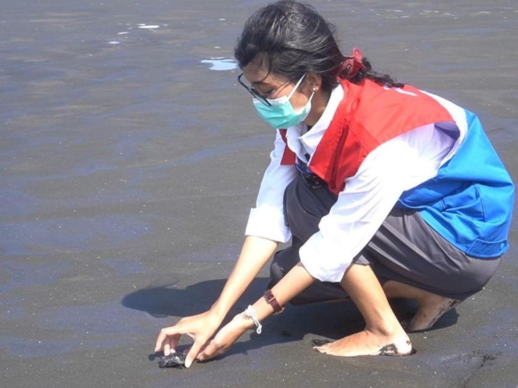 Pertamina Lepasliarkan 206 Anak Penyu Lekang di Pantai Sodong Cilacap