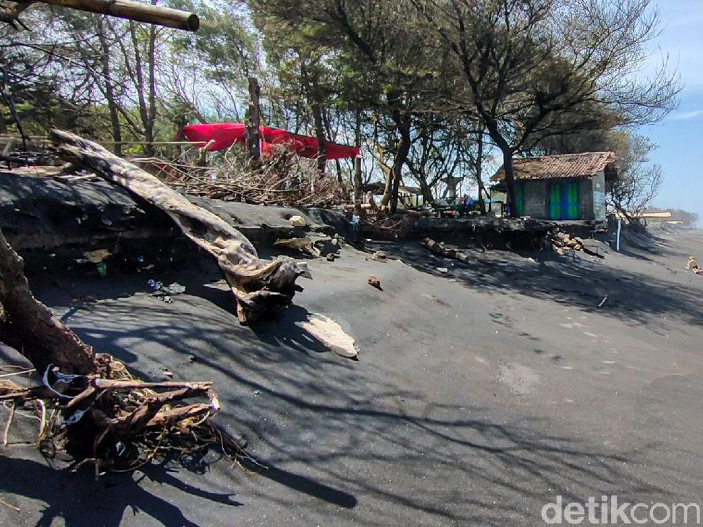 Bahaya! Tempat Konservasi Penyu di Pantai Trisik Terancam Abrasi