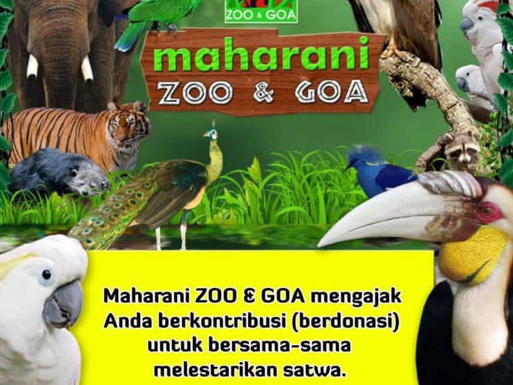 Maharani Zoo dan Goa Lamongan Buka Donasi untuk Menghidupi 900 Satwa