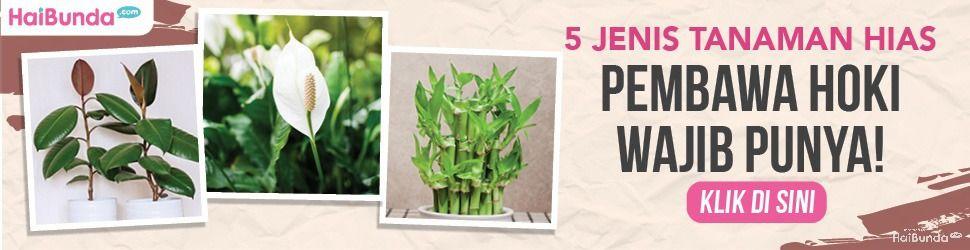 tanaman hias pembawa hoki