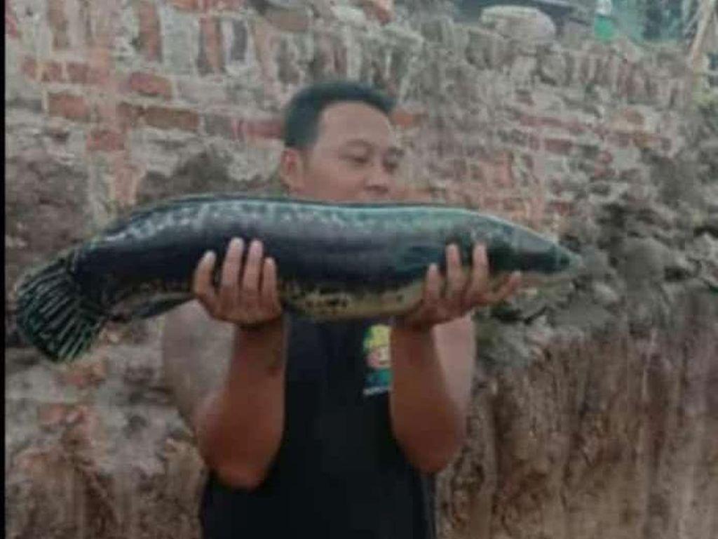 Cerita Warga Temukan Ikan Buas di Dekat Lokasi Terowongan Kuno Klaten