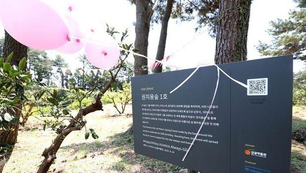 Fans G-Dragon mendirikan hutan sebagai hadiah ulang tahun