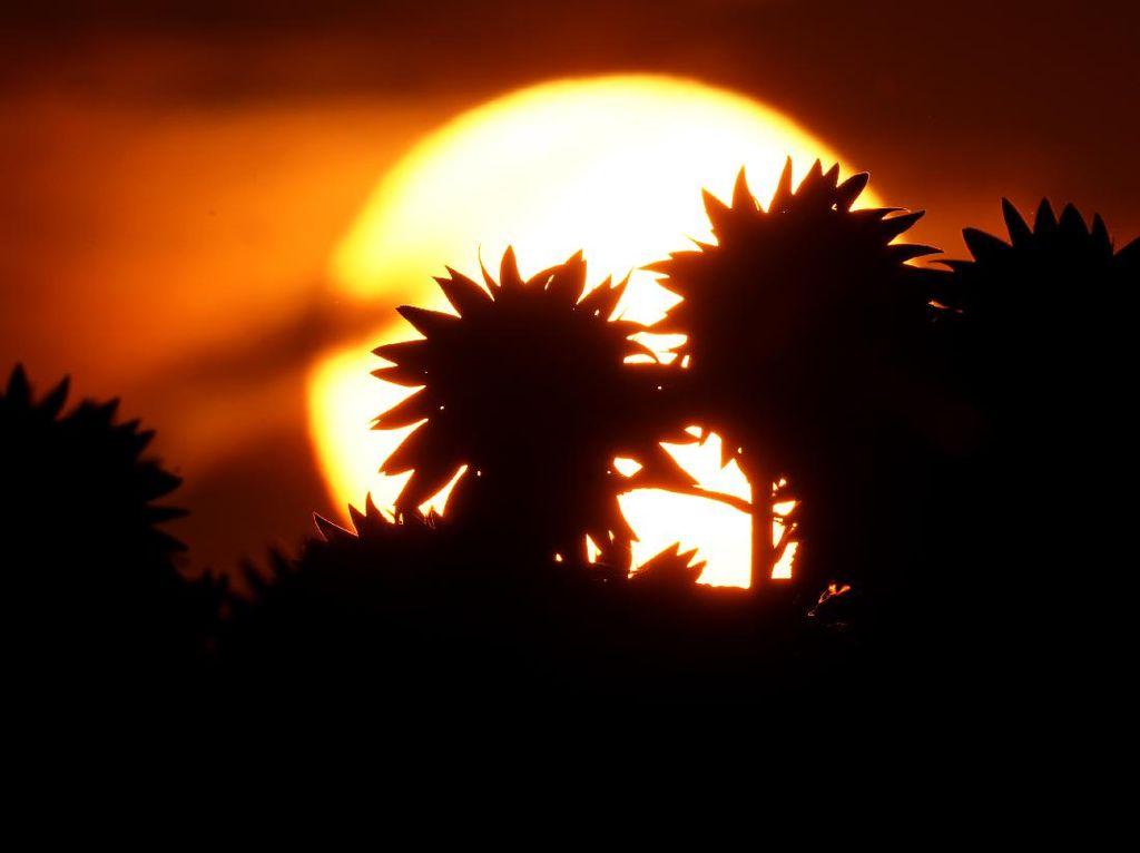 Ramai Postingan Matahari Terbit dari Barat, Ini Penjelasan NASA