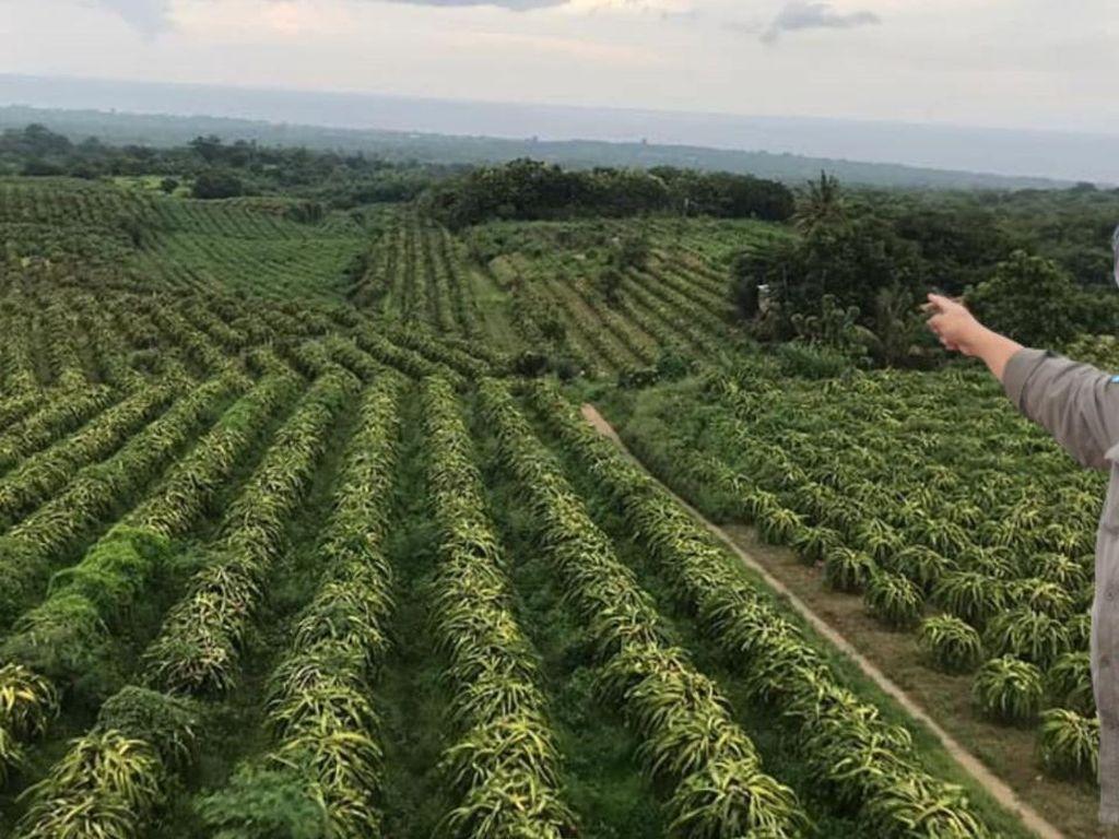 Kementan Canangkan Bangun 2.358 Kampung Hortikultura di Tahun 2022
