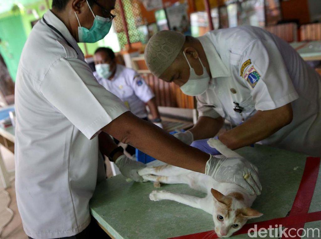 Melihat Proses Sterilisasi Hewan Peliharaan di Jakarta