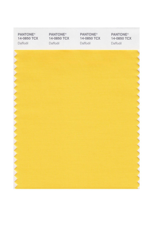 Daffodil 14-0850