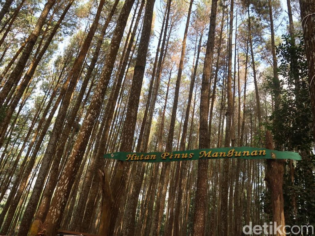 Resmi Gantikan Watu Lumbung, Pinus Sari Mangunan Mulai Uji Coba Buka Senin