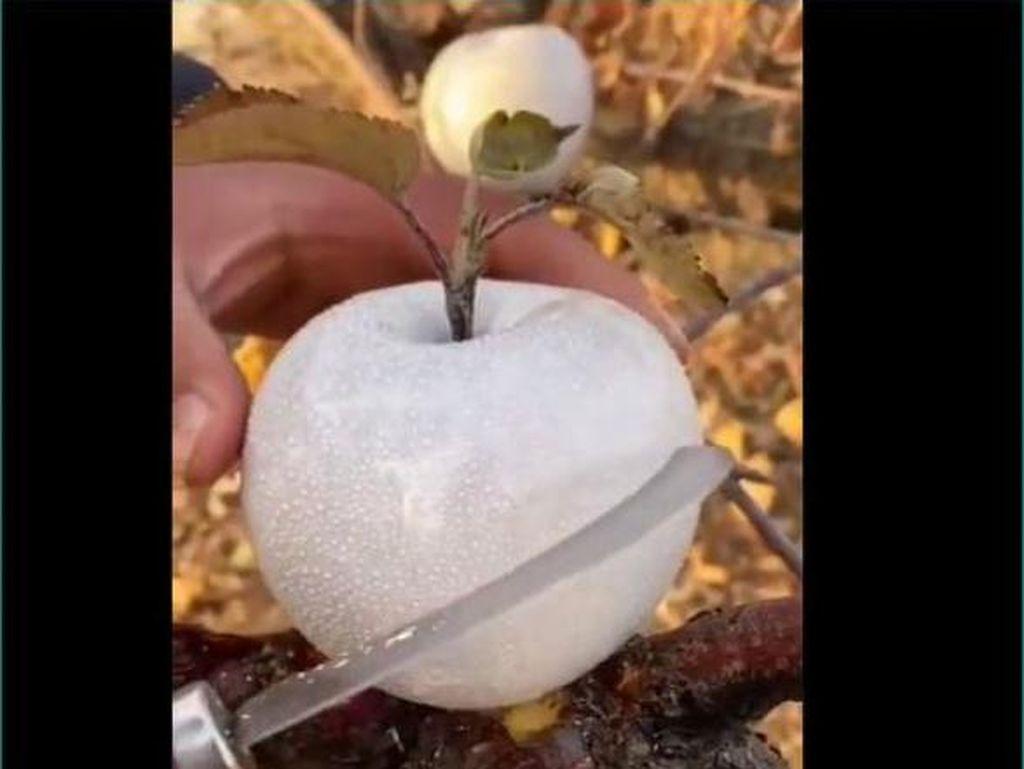 Setelah Apel Mutiara, KiniAda Apel Putri Salju yang Mirip Es Batu