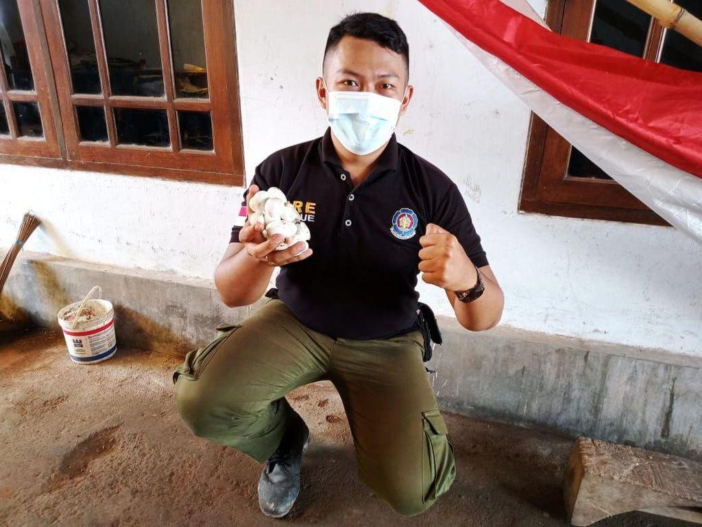 20 Telur King Kobra yang Ditemukan di Sekolah Banyuwangi Dilepas ke Alas Purwo