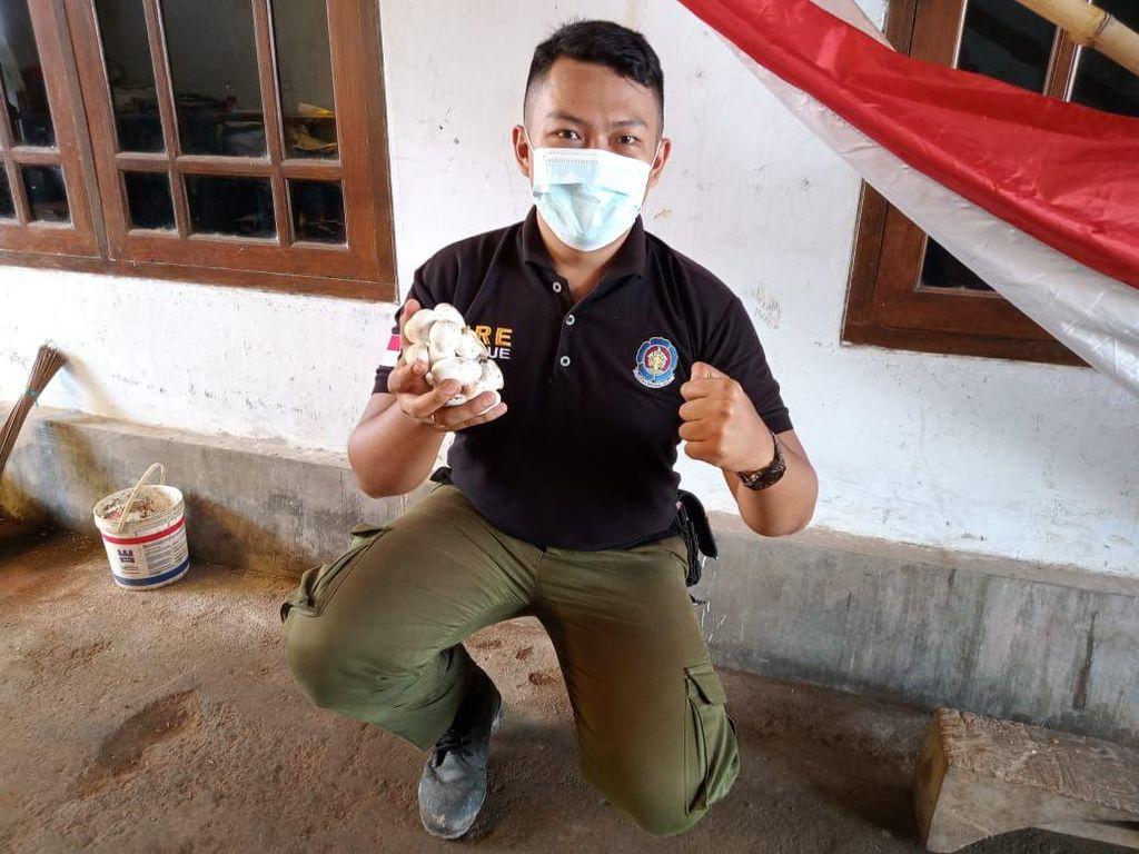 Bahaya King Kobra Saat Sarang dan 20 Telur Siap Menetas Ditemukan di Sekolah