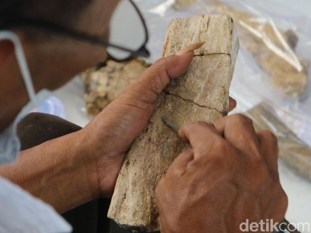 Foto: 61 Fosil Rusa-Gajah Purba Museum Patiayam Diselamatkan