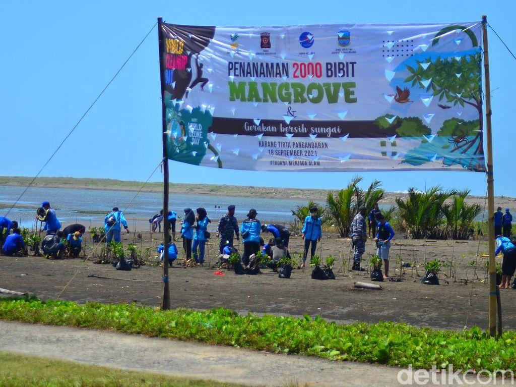 2 Ribu Pohon Mangrove Cegah Abrasi di Pantai Karangtirta Pangandaran