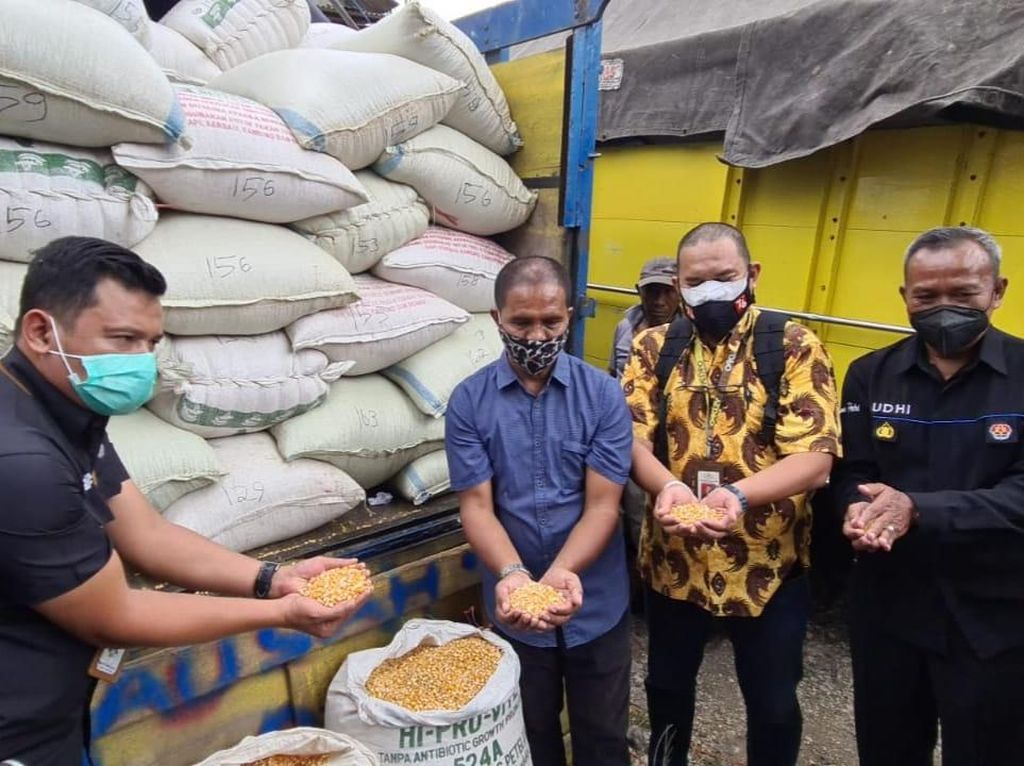 Dapat 20 Ton Jagung dari Jokowi, Suroto Seleksi Peternak yang akan Dibagi