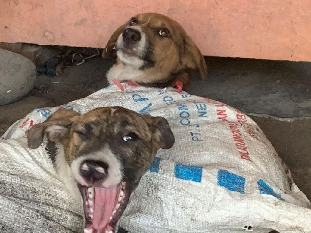 Pemkab Ungkap Ada 7 Rumah Jagal Anjing di Bantul
