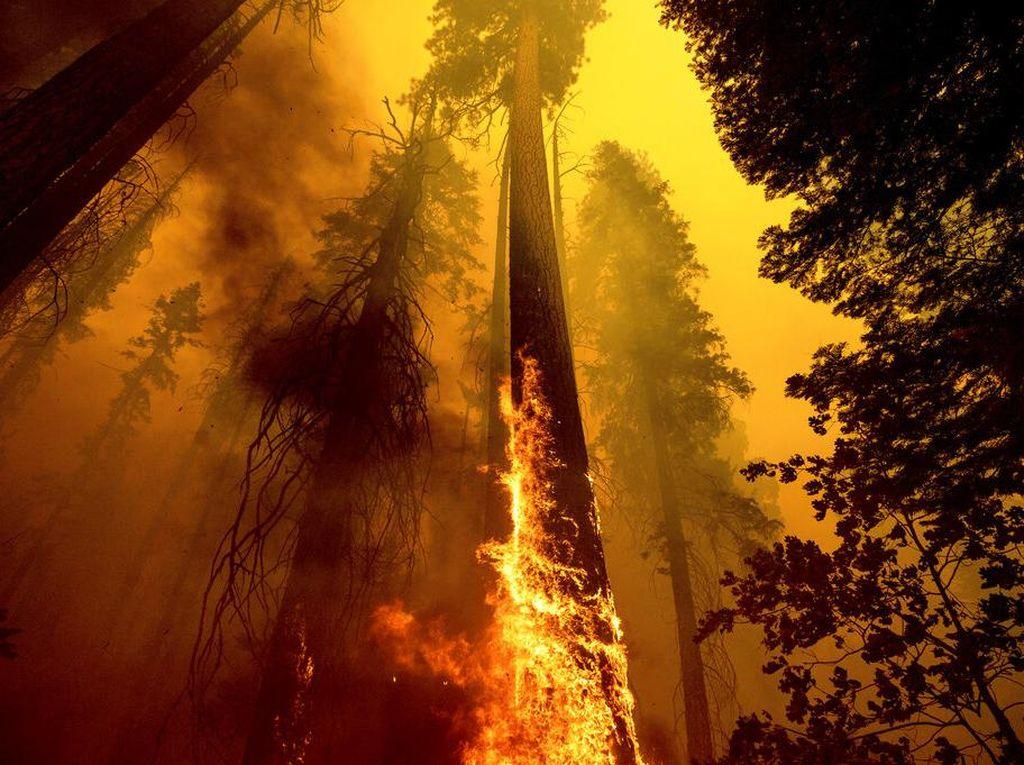 Suriah Eksekusi Mati 24 Orang Atas Kebakaran Hutan Dahsyat