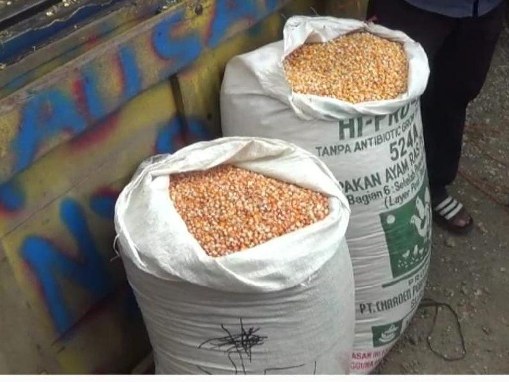 80 Ton Jagung dari Jokowi untuk Peternak Blitar Didistribusikan di 4 Kecamatan