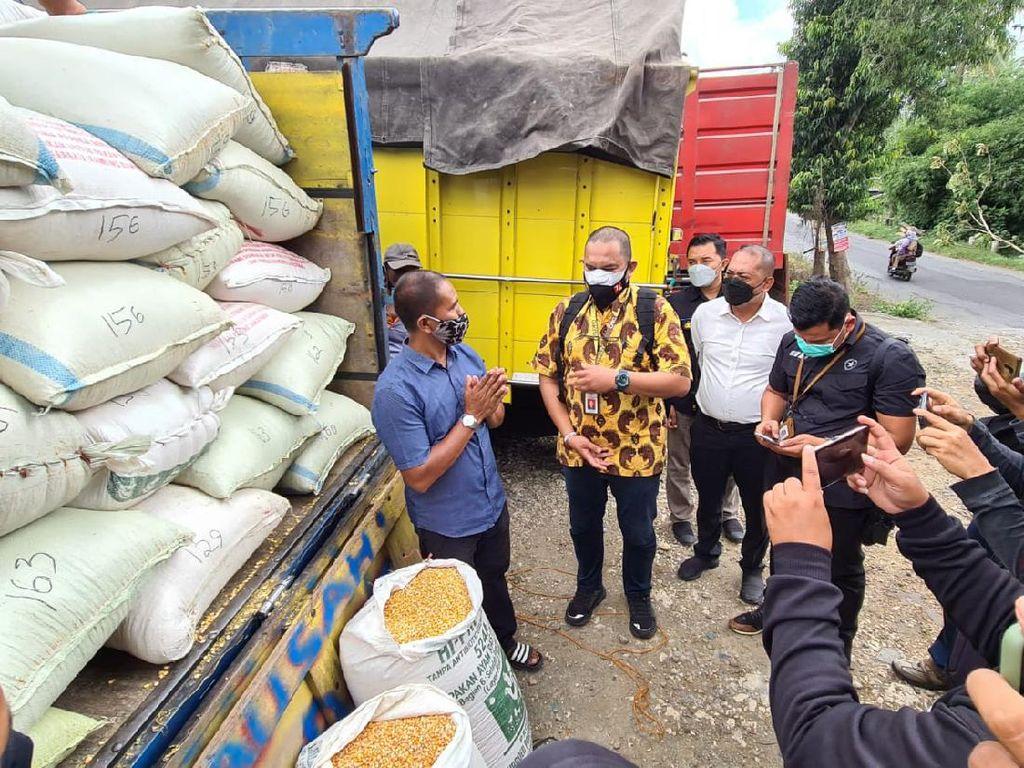 80 Ton Jagung dari Jokowi Belum Penuhi Kebutuhan Harian Peternak Blitar