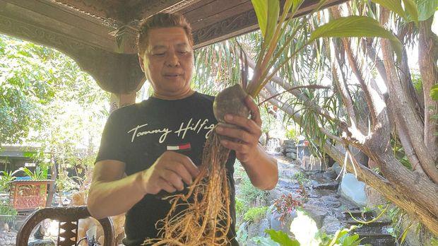 Ikhwan Ubaidilah, pengusaha warga Semarang yang menekuni pembuatan bonsai kelapa