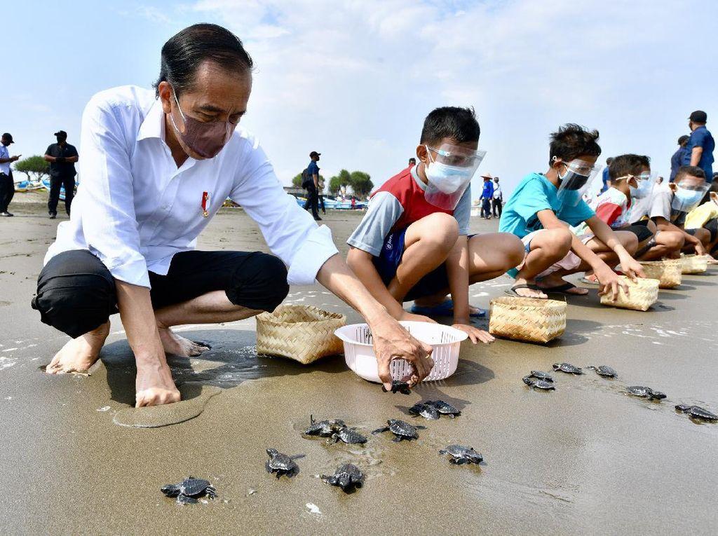 Foto-foto Presiden Jokowi Melepas Tukik di Cilacap