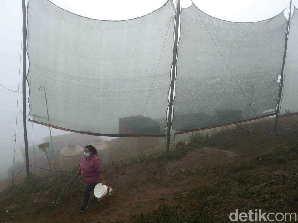 Cerdik, Petani Ubah Kabut Jadi Sumber Air Bersih Bermodal Waring